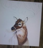 Commission 2 Deer WIP by so-long-lonesome