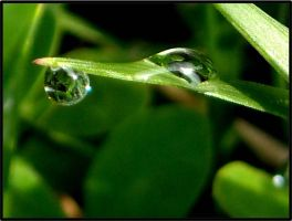 Morning Dew Droplets by K-ayu