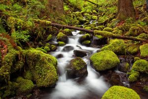 Sorenson Creek by greglief
