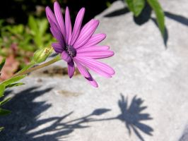 Flower with shade by archaeopteryx-stocks