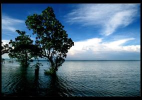 Mangroves.pt1 by petertaby