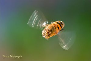 Morning Hover by GJ-Vernon