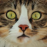My Crazy Cat by silverwing-sparrow