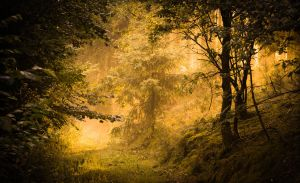 Golden path by erynlasgalenphotoart