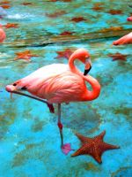 Flamingo by ollie87