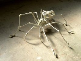 Endoskeleton Spider by Deino3330