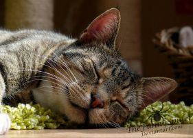 Tiresome Cat life by TheFunnySpider