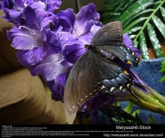 Purple Gladiolas Waterdroplets Stock 4 - Butterfly by Melyssah6-Stock