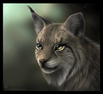 Lynx portrait by MoaWallin