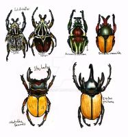 Beetle sketches by EatToast