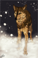 Wolf's Rain .:Toboe:. by WhiteSpiritWolf