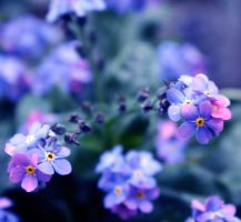 Forget-me-nots by ZoeWieZo