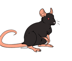 rat by coldfang22