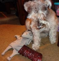 shamus b day gifts by wiccanwitchiepoo
