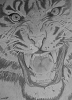 Angry tiger by Loverke