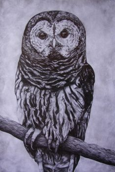 Owl by Divasart