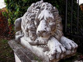 stone lion by wolfman74