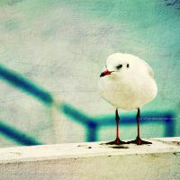 Seagull by xTive