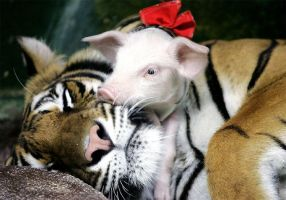 Tiger and Pig by Kiya-Hathor