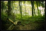 Forrest by mister-kovacs