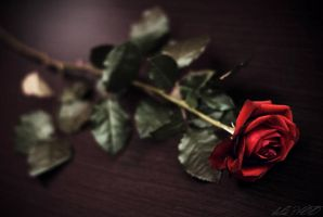 Red rose II by belie-photo