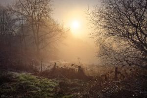 Cold Winter Mist by MaximeCourty