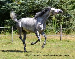 Calabria - Stock 4 by Horses--Stock