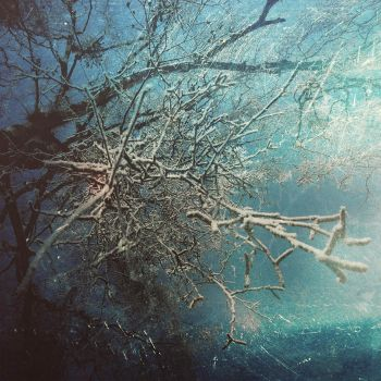 Twigs, springs, branches by ConceptualMiracles