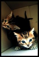 Orphan Kittens by moiaaron