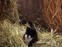 Playing in the Hay by siannajmj