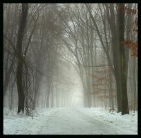 Foggy day by manroms