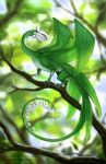 2015-05-30 lily of the valley dragon by agata-j