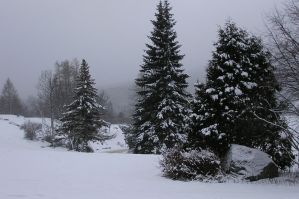 Trees in the Snow by equusstock