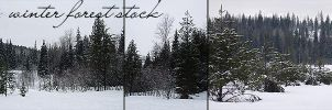 Winter Forest Stock by Spiteful-Pie-Stock