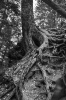 Twisted Tree Roots by Dalamar789