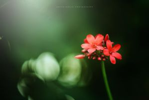 Red flower for you by avalenc