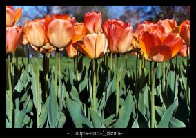 Tulips and Stems by SBurgess08