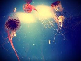 Jellyfish by littlemusicfreak