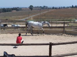 Grey Thoroughbred - 3 by horsiexstock