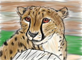 Cheetah sketch with color by EpicCatLover
