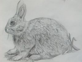 Bunny Rabbit in Pencil by YanasWorld