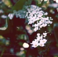Img 1727 by memo--ry