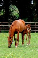 Chestnut Mare and Foal by Serendipity222
