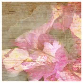 Pink Beauty on Wood by MaurasCreations