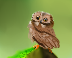 Owl by GreenPoem
