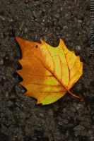 Golden Leaf by darkmonkey78