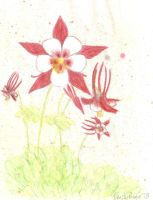 Columbines 1of 3 by Spudnuts