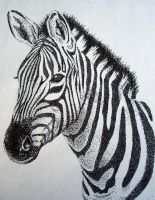 Zebra Stippling by AshleyCharlene