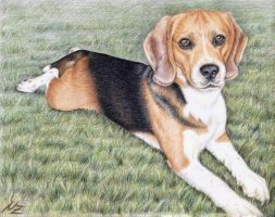 Beagle by ArtsandDogs