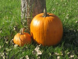 pumpkins by soulview-stockphotos